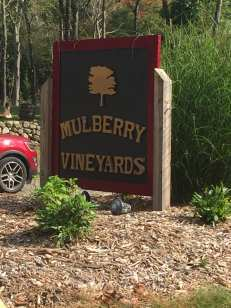 mulberryvineyards01